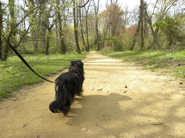 Penny Packer Park (7)