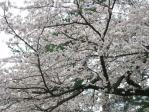 箱根20100403-04⑱