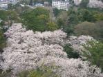 箱根20100403-04_23