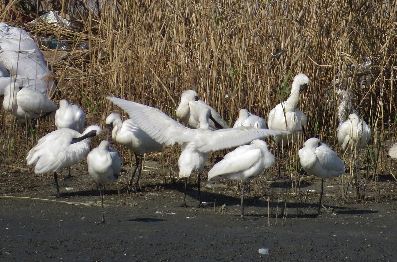 s-野鳥観察13.11.13 141