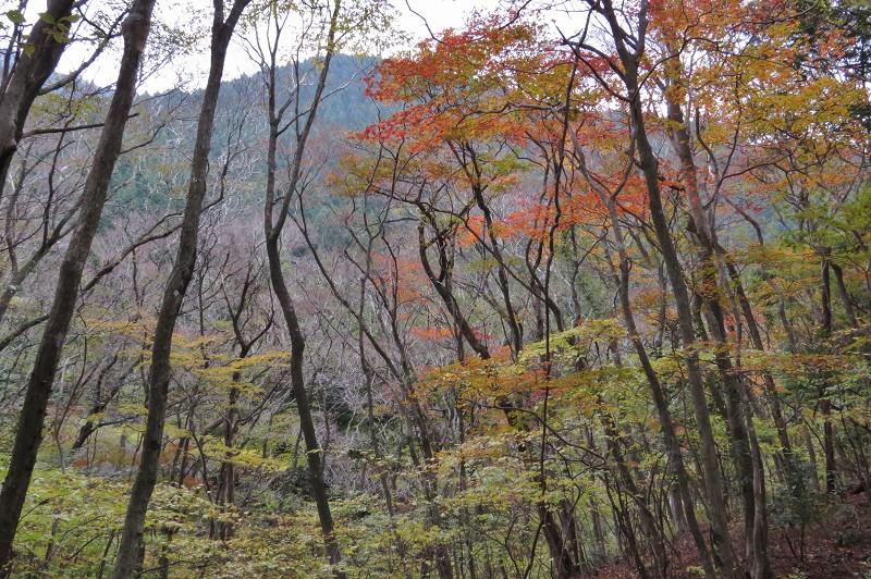 s-蛤岳13.11.16 117