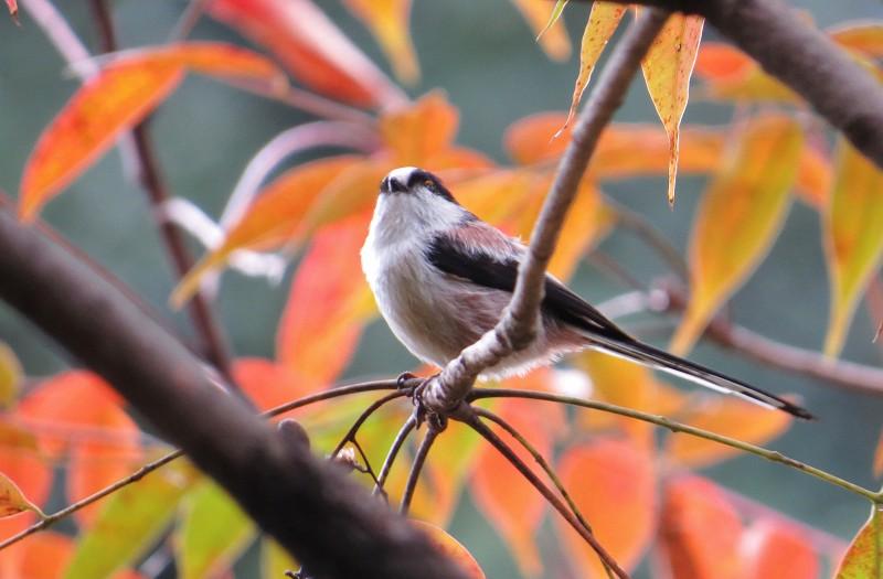 s-鳥見・東公園13.11.25 021