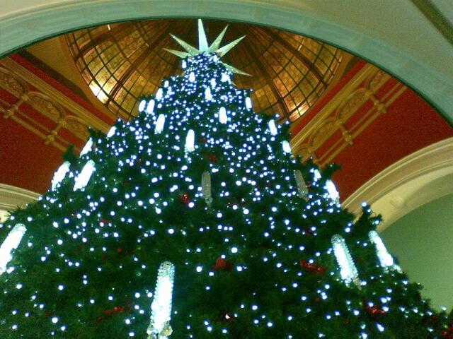 オーストラリア クリスマスツリー
