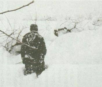豪雪の果樹園
