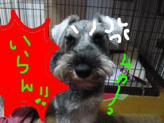 snap_jirokkosan_201010191833.jpg