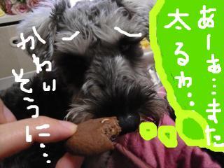 snap_jirokkosan_20101019352.jpg