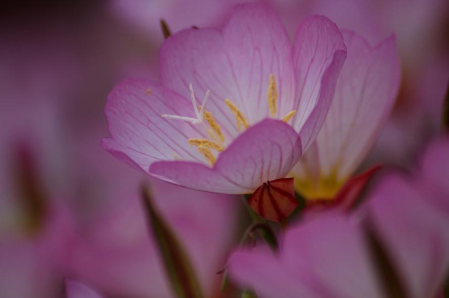 庭の花 (8)@s
