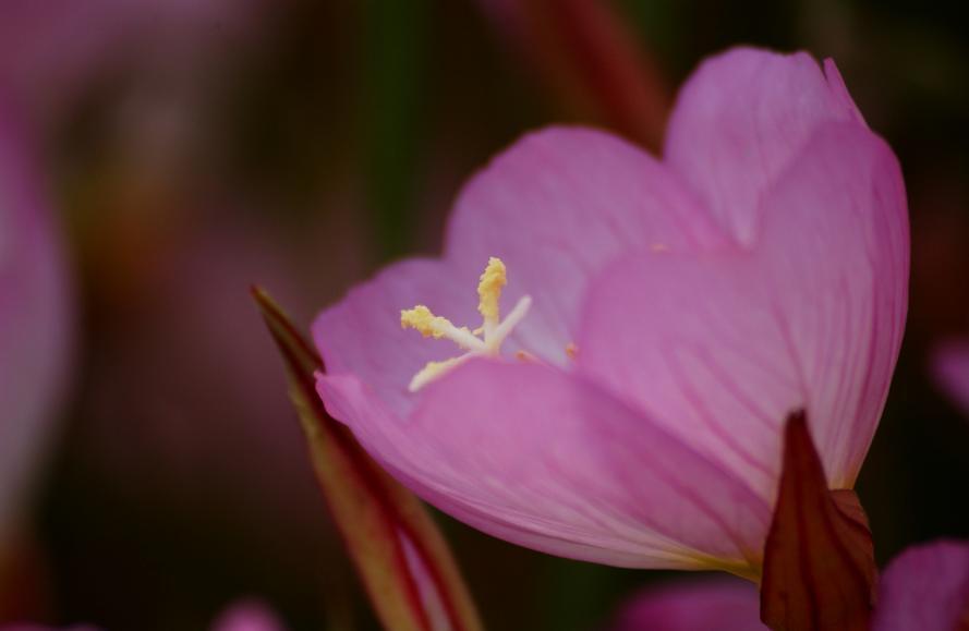 庭の花 (7)@s