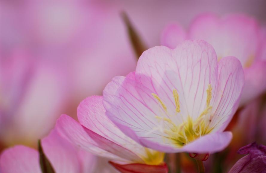 庭の花 (5)@s