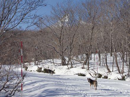 雪道を散歩