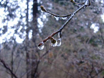 雨のしずくのように見えて氷