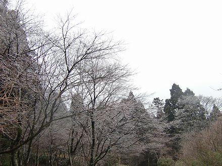木の枝が白く