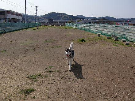 ドッグラン須崎