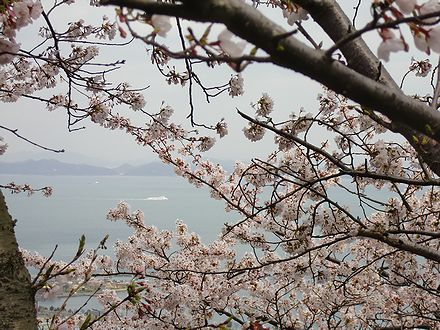 五色台の桜と瀬戸内海