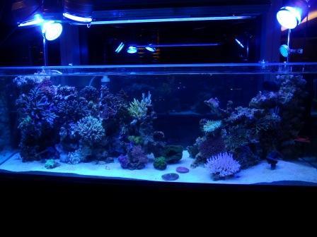 New tank June 2010