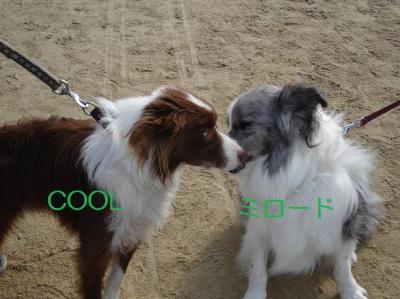 COOL&ミロード