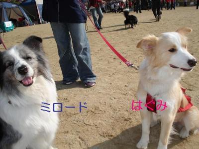 はぐみ&ミロード