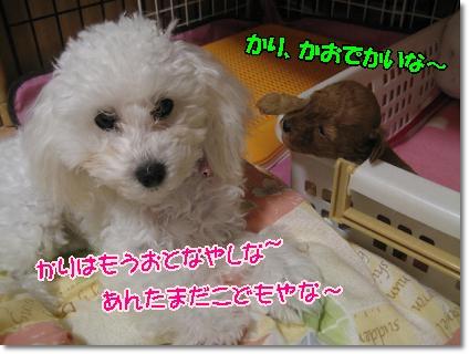 かりと子犬2