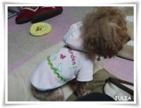 0303ジュリ、ジェジェの服