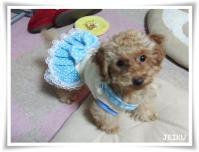 0303ジェジェ、ジュリのワンピ