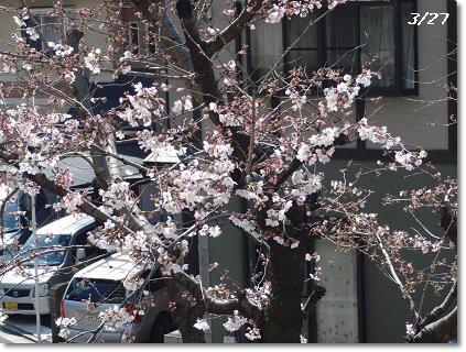 0327桜
