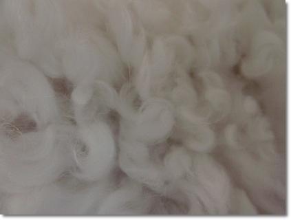 0410花梨の毛