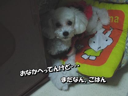 0512かりちゃん