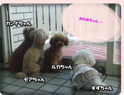 0807看板犬たち