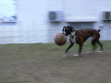 2010214ティンボール2