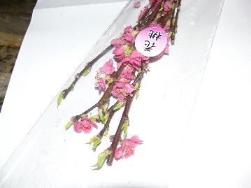 201032お花