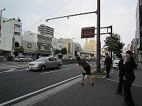 IMG_2046s-s-.jpg