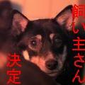 広島 まーま 柴犬 ♀ 3才s