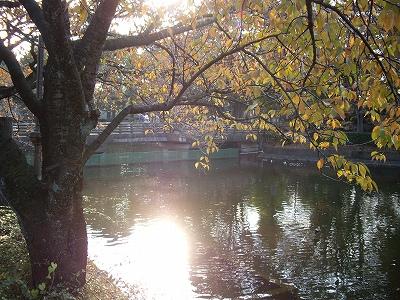 鹿沼公園2-20091107