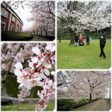 10桜ー0101page