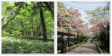 公園page