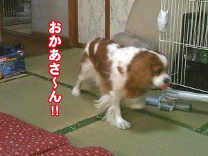 kai091202-8.jpg