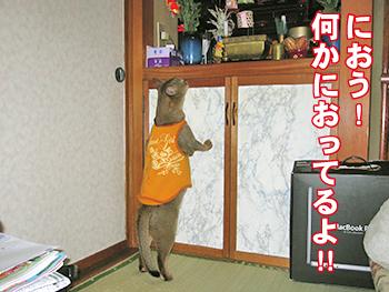 kaiq00427-1.jpg