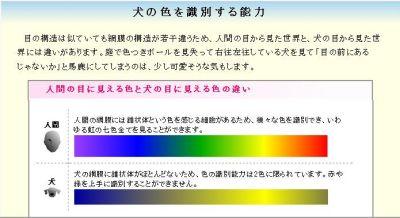 犬の色覚_035