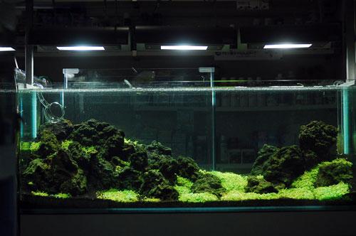 岩組レイアウト水槽