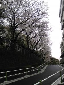 コピー ~ 2010.04.04. お茶会 006