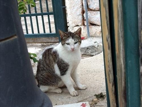 アレオポリの猫さん