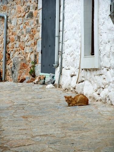 アレオポリの猫さん (1)