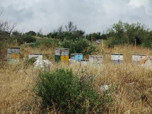 アレオポリ_蜂の巣箱 (2)