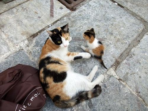 アテネ_プラカの猫さん親子