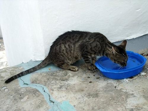 スキロス・タウンの猫さん (1)