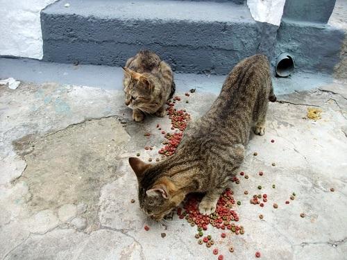 スキロス・タウンの猫さん (2)