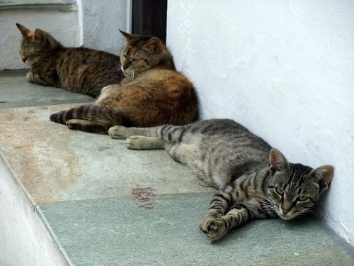 スキロス・タウンの猫さん