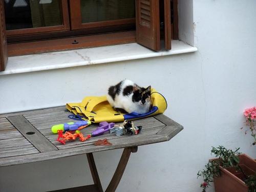 マガジアの猫さん