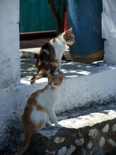 モロスの猫さん