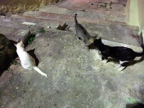 夜のナフプリオで猫の集会